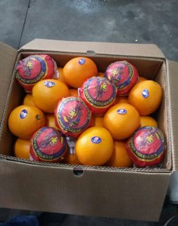Organic fresh Valencia orange